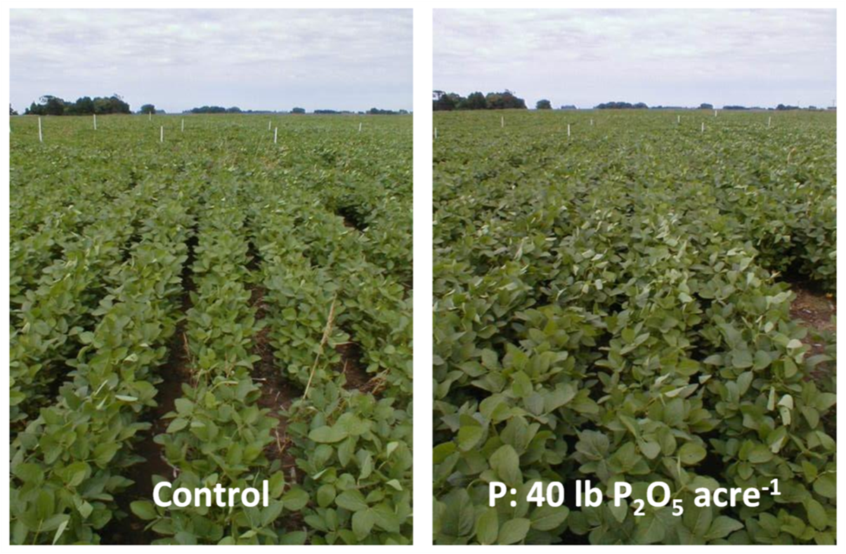 Soybean_response_to_P