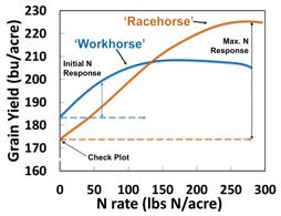 example racehorse high yield potential, workhorse has quick response to nitrogen